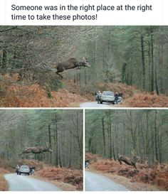 ★☀★ BEING AT THE RIGHT PLACE AND THE RIGHT TIME!! DEER CAN AND DO JUMP LIKE THIS!! ★☀★ Nature Animals, Animals And Pets, Funny Animals, Cute Animals, Beautiful Creatures, Animals Beautiful, Funny Animal Pictures, Cool Pictures, Deer Jumping