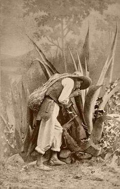 Tlaquichero Cuando niño,a los ocho años,estando en el campo de Nanacamilpa,Tlaxcala,me tocó en suerte ver a uno de estos hombres,extraer el agua miel,que luego de fermentado,se llamaba pulque.