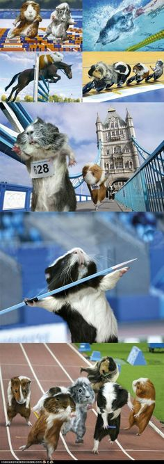 The 2012 Guinea Pig Games