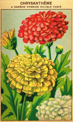 old fashioned seed packets - Google Search