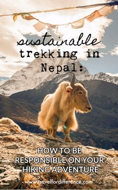 Interested in trekking in Nepal? Here is a guide on how to be a responsible traveller and ensure that your hiking adventure is both ethical and sustainable. Slow Travel, Asia Travel, Travel Nepal, Travel Guides, Travel Tips, Travel Destinations, Responsible Travel, Sustainable Tourism, Best Places To Travel