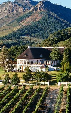 Vineyards surrounding La Couronne Hotel, Franschhoek, Western Cape, South Africa