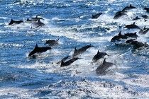 Russia Takes Control Of Ukraine's Dolphin Army
