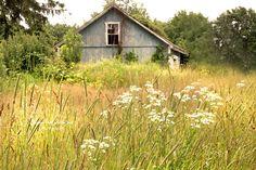 Field of Flowers Shaw Farm Original Photography