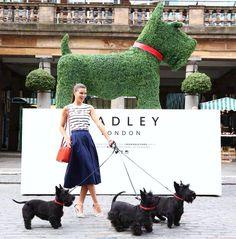 Radley Scotties 2014