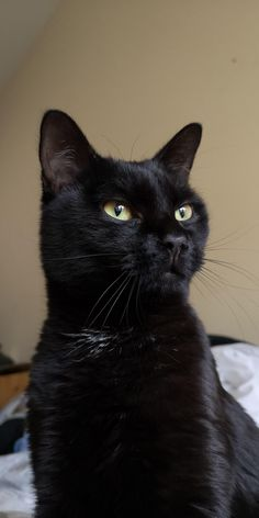 My house panther contemplating who's worthy. Animals And Pets, Baby Animals, Cute Animals, Cute Cats And Kittens, Cool Cats, Black Cat Aesthetic, Animal Gato, Cute Black Cats, Beautiful Cats