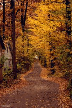 Autumn Road...lovely walk home! <pin by Cathy Poole>