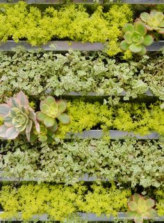upcycled vertical container garden