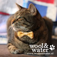 The Pet Bow Ties are handcrafted in Amsterdam, knitted in washable Cotton & absolutely tested on Cats & Dogs of all sizes and breeds to ensure the final product is pet friendly & comfortable. Is your Puss the Cat's Miaow or your Dog a Dapper Chap? Then these collar attachments were knitted especially for them. Each design is 1 of only 25 made & comes with it's specific Edition tag. Cooper modelling The Yellow Cat's Miaow. #petbowtie