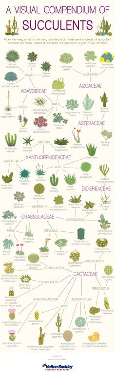 A Visual Compendium of Succulents by cactus.art.biz #Infographic #Succulents