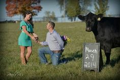 Cute save the dates with your favorite show heifer. #stockshowlife