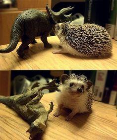 Hedgehog vs Dinasour