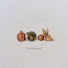 Day 170: Appelliefies | Cape Gooseberries | Physalis peruviana. 29 x 11mm.  #365postcardsforants #miniature #watercolour #wdc624 #gooseberries #appelliefies #capetown  (at Woodstock, Cape Town)