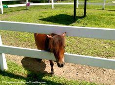 Land of the Little Horses in Gettysburg Pennsylvania - Great family fun!