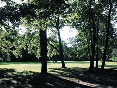 Baumreihe  #park #grünau #leipzig #momentaufnahme