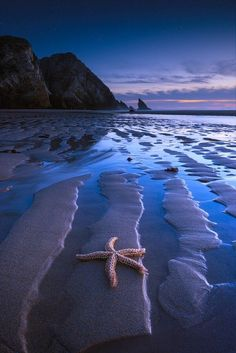 Sea star on beach ☄#Nature