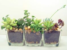 Terrarium Succulent planter DIY kit Desk Accessories  or Wedding Centerpieces  Materials: love, succulents, soil, rocks, glass, plants, planter, clear glass container $19.00 - would make a great gift.