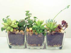 Terrarium Succulent planter DIY kit Desk Accessories Materials: love, succulents, soil, rocks, glass, plants, planter, clear glass container $19.00