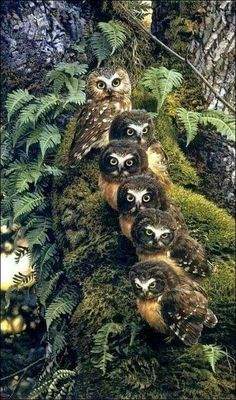 A beautiful Owl Family Beautiful Owl, Animals Beautiful, Beautiful Family, Majestic Animals, Pretty Birds, Love Birds, Animals And Pets, Cute Animals, Funny Owls