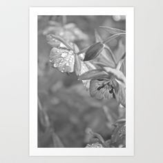 Drops of Spring Art Print by Nicole Christine - $15.00
