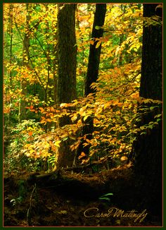 Autumn in The Great Smoky Mountains National Park, Tennessee