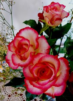 Three beautiful roses look lovely in a bouquet in a living room. Beautiful Rose Flowers, Flowers Nature, Exotic Flowers, Amazing Flowers, Beautiful Flowers, Three Roses, Rose Of Sharon, Rose Wallpaper, Gras