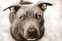 """Tanítsd meg a kutya a parancsot: """"Fetch"""".  3. szakaszában a tanulás"""