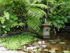 Water garden at Lankester Botanical Gardens, Costa Rica