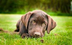Preview wallpaper dog, lie, look, sadness, grass