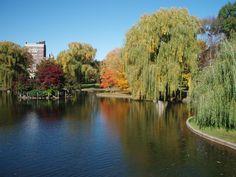 scenry Boston,MA