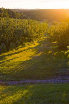 orchard. Imagine running through this in a flowy summer dress or having a picnic in the little patch of sunlight and absorbing that vitamin D