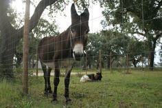Horses, Animals, Viajes, Animales, Animaux, Animal, Animais, Horse
