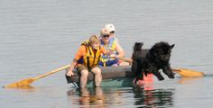 Colonial Newfoundland Club hits the water - Dogs demonstrate derring-do at Codorus this weekend - Evening Sun Newfoundland Dogs, Evening Sun, Gentle Giant, Regional, Colonial, Puppies, Club, Friends, Water