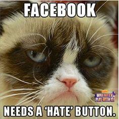 grumpy cat facebook