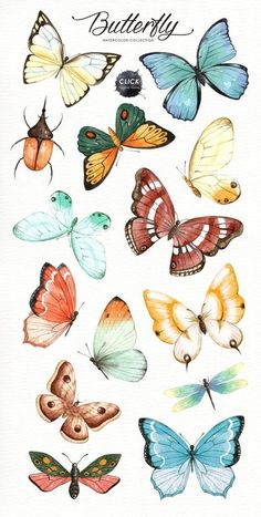 butterflies The set of high quality hand painted watercolor butterfly images in bright and fresh color palette. Included moth, dragonfly and ladybug. What do you get: 21 x Hand painted wa Butterfly Painting, Butterfly Watercolor, Butterfly Wallpaper, Watercolor Paintings, Simple Butterfly Drawing, Butterfly Sketch, How To Draw Butterfly, Butterfly Clip Art, Anime Butterfly