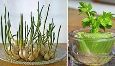 7 druhů zeleniny, které můžete pěstovat znovu a znovu