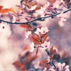 blooms-and-shrooms:  Spring is here! by Lukreszja
