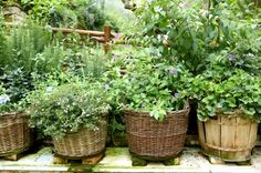 Herb Garden Inspiration and Ideas-more ideas on this Web site...