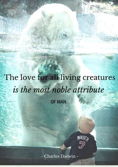 #EndExtinction quote by Charles Darwin // photo by Kimberly Steffl