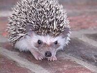 Watch Jan Brett Draw a Hedgehog. Animal Drawings, Art Drawings, Art Music, Music Books, Jan Brett, Cute Hedgehog, Winter Theme, Kid Activities, Preschool Ideas