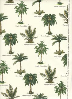 All sizes | Palm Tree Varieties | Flickr - Photo Sharing!