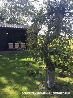 Oude appelboom/ oude fruitboom uit het assortiment van Schouten Bomen en Loonbedrijf met bijenkasten op de achtergrond. Bekijk onze website voor het complete aanbod oude fruitbomen. Website, Plants, Plant, Planets