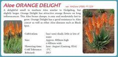 Aloe Orange Delight