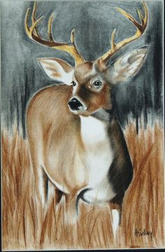 Whitetail Deer  An original pastel drawing put to 11 x 16 canvas on Etsy, 45,15€