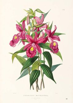James Bateman, The Orchidaceace of Mexico and Guatemala, 1843.