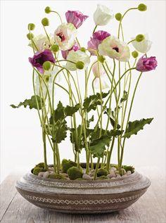 poppies in unique floral arrangement, low / shallow vase Ikebana, Clay Flowers, Fresh Flowers, Beautiful Flowers, Garden Plants, Indoor Plants, House Plants, Deco Floral, Arte Floral