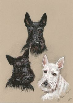 5X7+SCOTTISH+TERRIER+PORTRAIT+DOGS+SCOTLAND+RYTA++print+of+painting+PET+FOLK++#Realism
