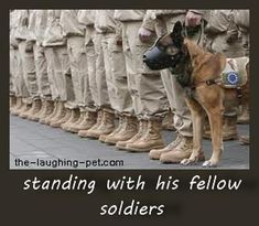 Dog soldier MWD