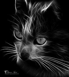CAT!! by Peyman Az, via 500px