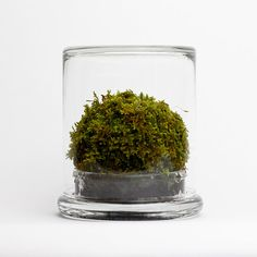 The Mosser - a small glass terrarium filled with a simple round moss ball. The Mosser comes with a glass mister bottle used to feed your plant. They are very easy to care for and only need to be sprayed once every two weeks with filtered water.